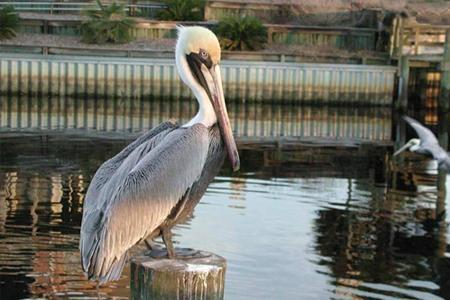 Cape San Blas Parks and Wildlife
